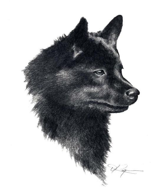 Schipperke Dog Names Schipperke Dog Pencil Drawing