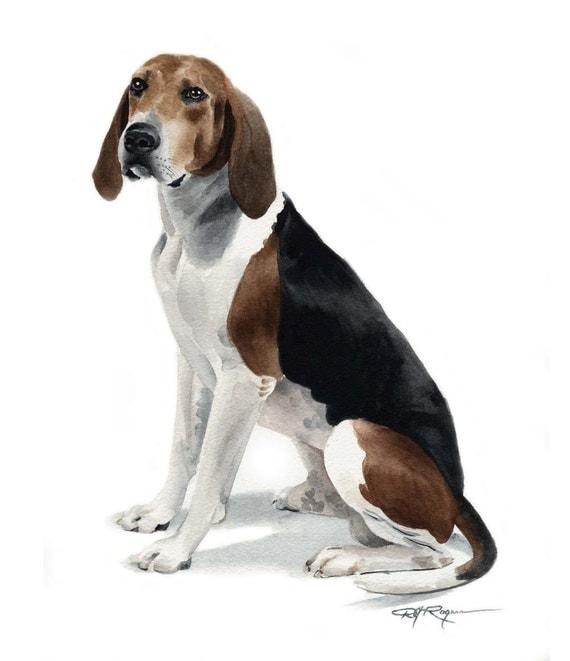 Treeing Walker Coonhound Art Print By Watercolor Artist Dj