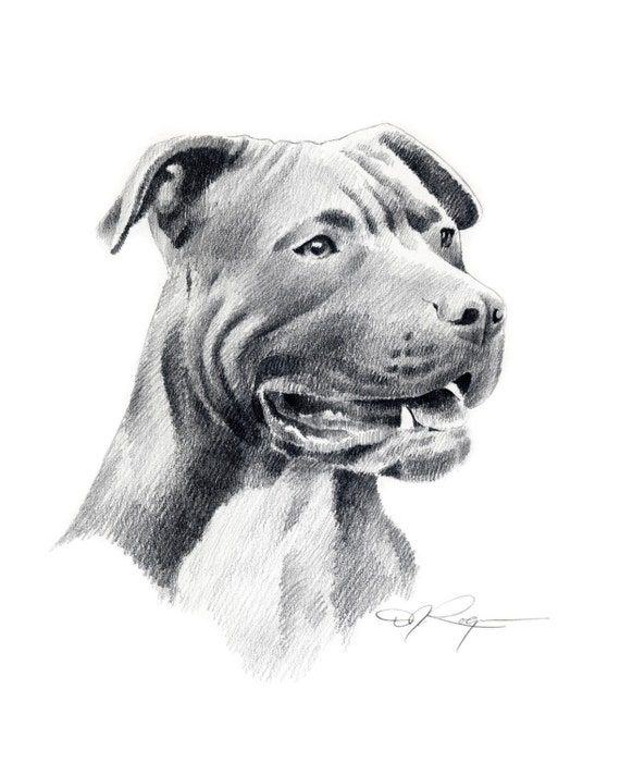 American pit bull terrier dog signed art print by artist dj - Dessin de pitbull ...