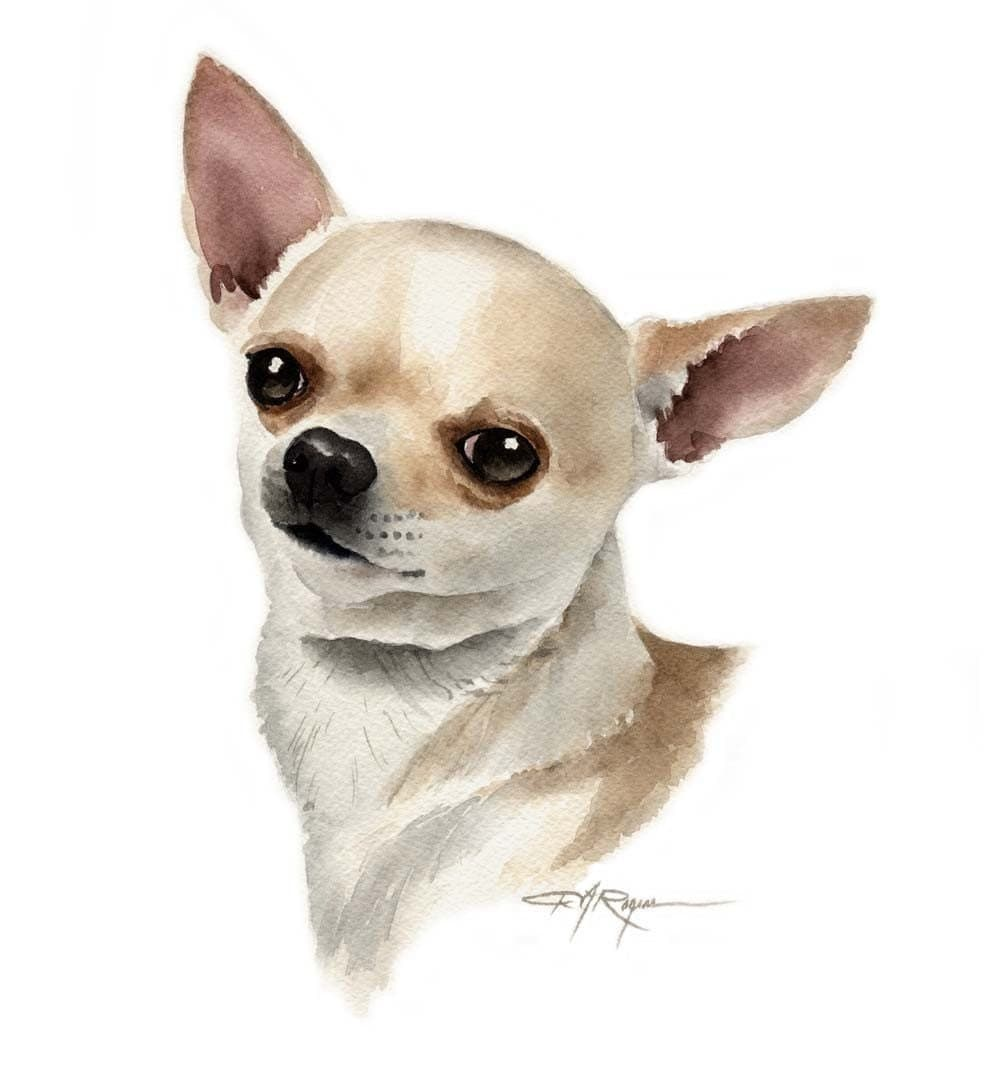 This is a photo of Gutsy Drawing Of Chihuahua