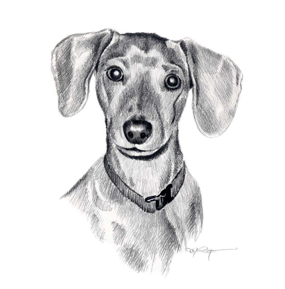 Miniature dachshund dog pencil drawing art print signed by - Dessin teckel ...