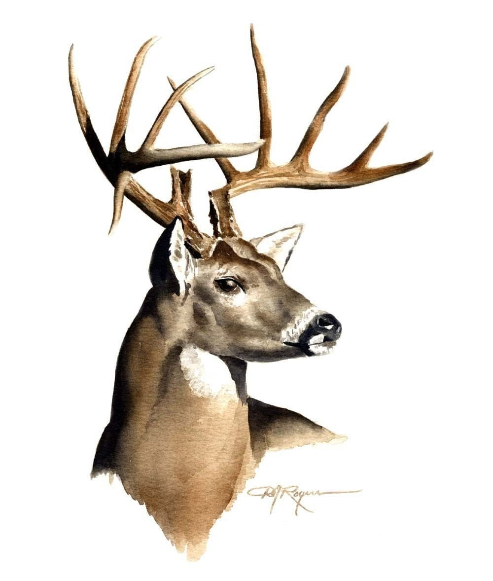 It is a picture of Astounding White Tailed Deer Drawing