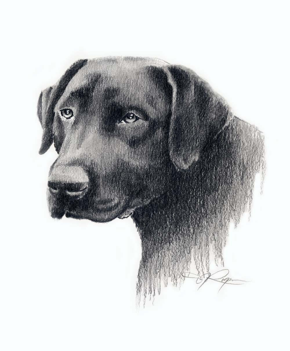 BLACK LAB Drawing Labrador Dog Art Print Signed By Artist DJ