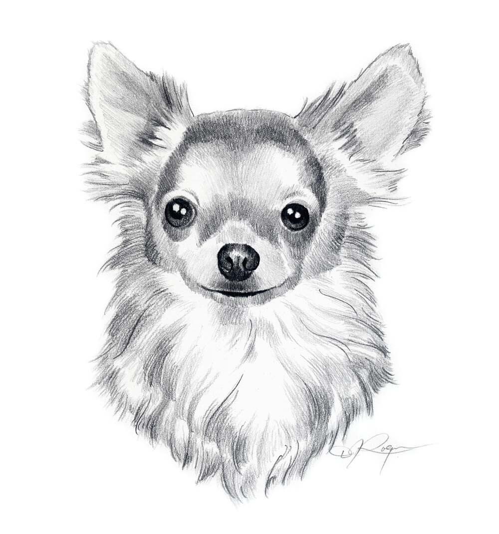 LONG COAT CHIHUAHUA Dog Pencil Drawing Art Print Signed by