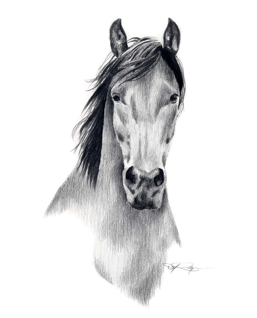 Mustang Horse Pencil Drawing Art Print Signed By By
