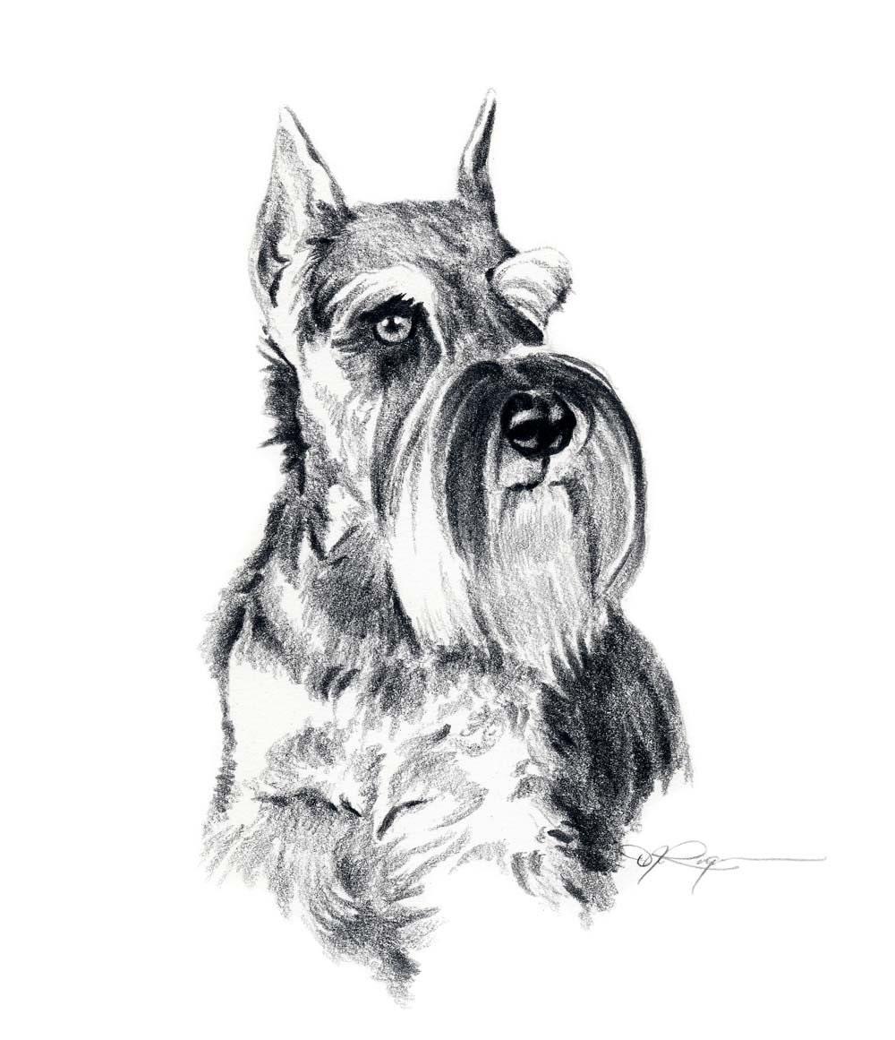 schnauzer drawings Gallery