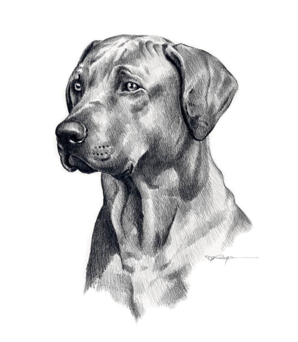RHODESIAN RIDGEBACK Dog Pencil Drawing Art Print By K9artgallery