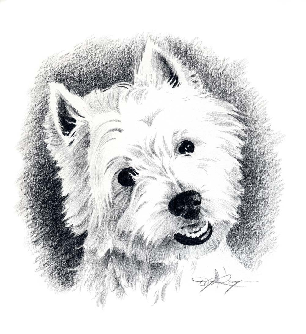 WEST HIGHLAND TERRIER Dog Pencil Drawing Art Print Signed by