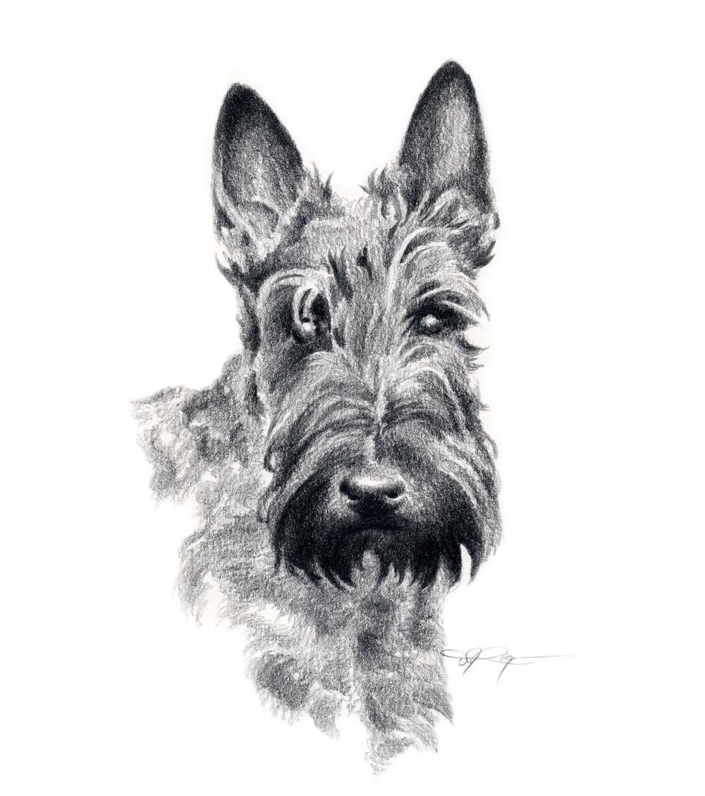 SCOTTISH TERRIER Dog Pencil Drawing Art Print Signed By Artist
