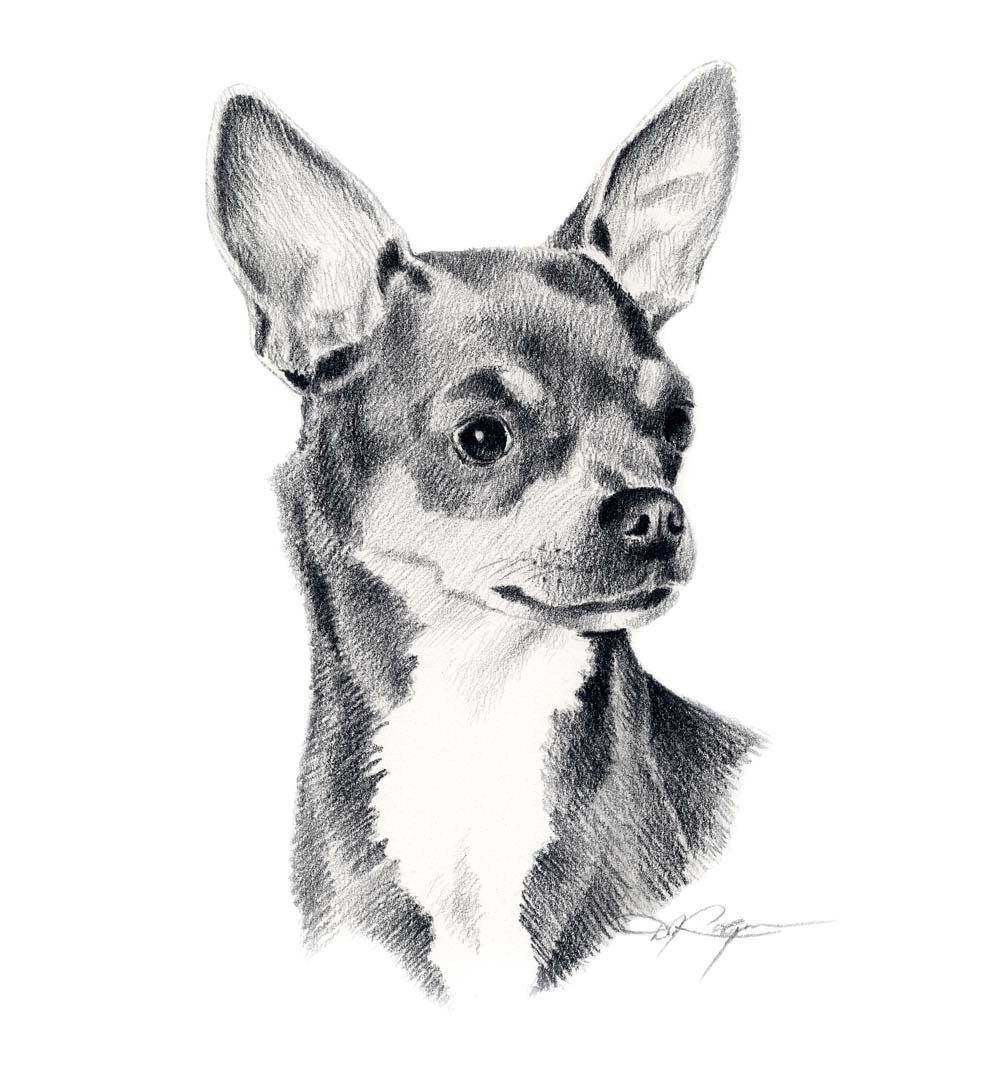 It is a picture of Unusual Drawing Of Chihuahua