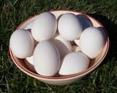 "18 Blown Goose Eggs 9""+ 1 Hole Pysanky"