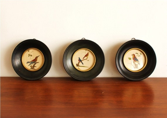 Set Of 3 Round Framed Bird Prints Vintage By Highstreetmarket