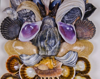 """Ocean creature. Decoration collectible seashell wall nautical mask. 9"""" X 12""""."""