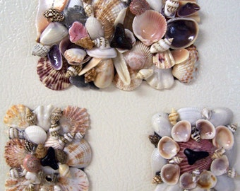 Sea Shells Kitchen Magnets with Sharks Teeth - Set of Three