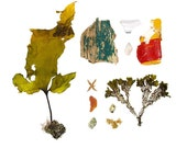 Beachcombing series No.50 - 12 x 12 photograph - starfish, sea star, shell, seaweed, driftwood, sea glass