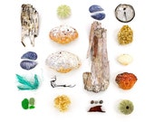 Beachcombing series No.34 - 12 x 12 photograph - birch bark, crab, shell, mussel, sea glass, seaglass, sea urchin, seaweed