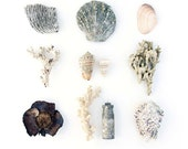 Fiji Beachcombing series No.6 - 12 x 12 photograph - seashell, coral, scallop, cone shell