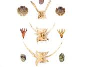 Fiji Beachcombing series No.2 - 12 x 12 photograph - seashell, fishbone, crab, beach stone