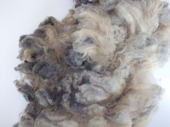 RAW Grey Varigated CVM/Romeldale Wool - (approx. 4.0 oz)