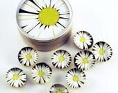 Funky Glass Push Pins  Thumb Tacks Cork Board Pins in  Lazy Daisy with Gift Tin (PT12)