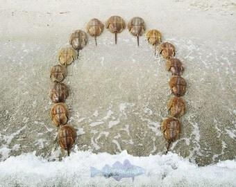Horseshoe Beach giclee print