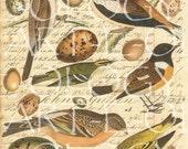 Digital Bird and Egg Sheet Part Trois...