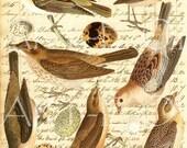 Digital Bird and Egg Sheet Part Un...