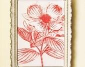 Pink Dogwood Flower - 5 x 7 Blossoming Botanical Illustration Print