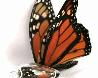 Cocoon Necklace - Monarch