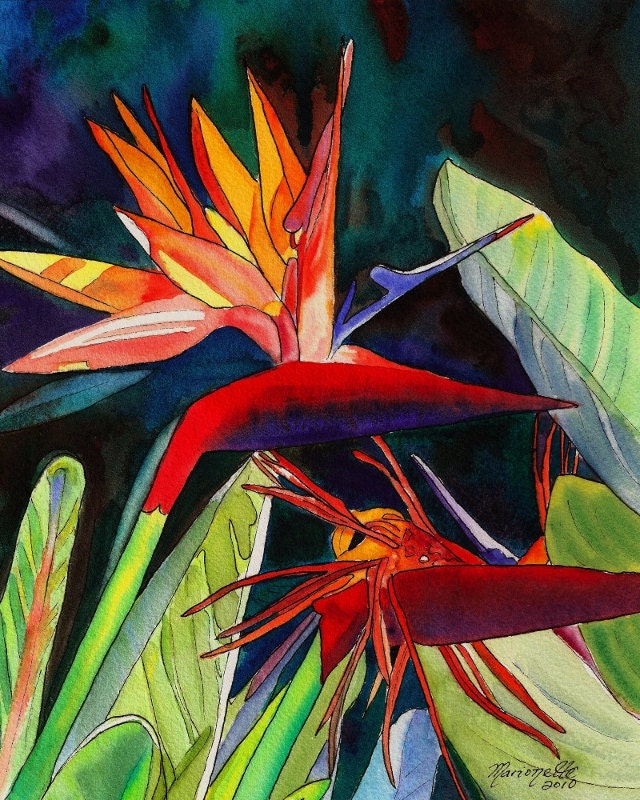 Bird Of Paradise 8x10 Print From Kauai Hawaii By Kauaiartist