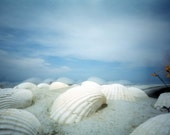 Pinhole photograph and postcard - Sea Shells