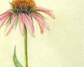 Cone Flower Original Free Shipping