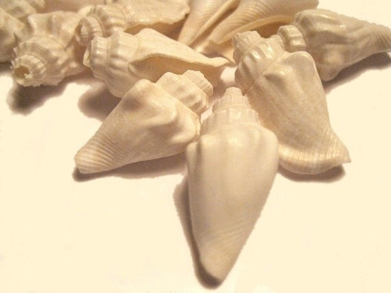 SALE Set of Little White Conch Shell Beads 25mm (30)