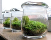 set of 3 moss terrariums