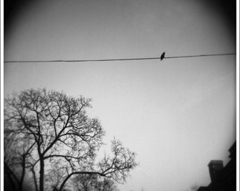 Bird on a Wire, 5x5 Matted Print