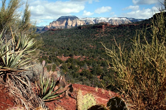 Desert Landscape Photography Nature Fine Art Photography Sedona Cactus and Red Earth - Winter Mountain Photography - Southwest Wall Decor