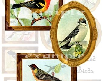 Framed Birds Digital Collage Sheet