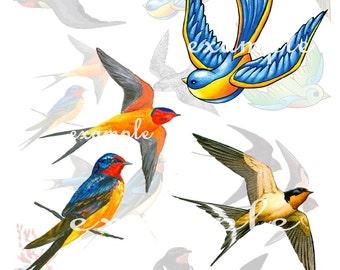 Birds Digital Collage Sheet 3 - 11 Images