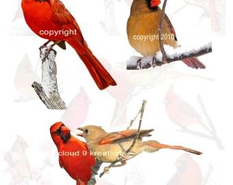 Beautiful Cardinals...Birds...Digital Collage Sheet 1