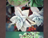 Succulent succulents - Series - a set of 12 photo postcards