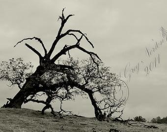 Tired Oak