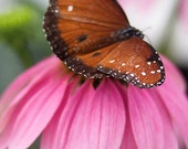 Queen Butterfly Pink Flower 5X7 Photograph