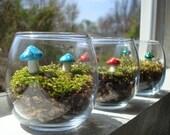 Mushroom Garden Terrarium- Maintenance Free!