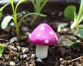 Magic Garden Kit