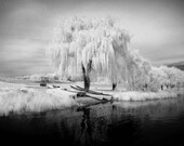 Canoes Under the Weeping Willow - 8x12 Fine Art Infrared Photograph