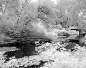 Alfred Lily Pool in Lincoln Park Zoo -  8x12 Fine Art Infrared Photograph