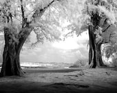 Hawaiian Trees - 8x12 Fine Art Infrared Photograph