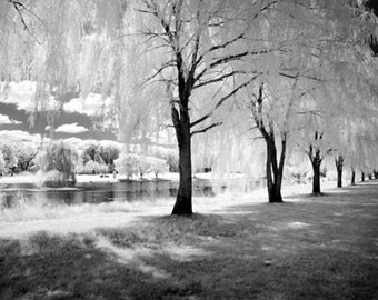 Under the Weeping Willow - 8x12 Fine Art Infrared Photograph