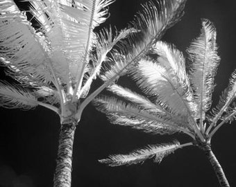 Two Palms in Hawaii - 8x12 Fine Art Infrared Photograph