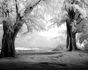 Hawaiian Trees - 8x12 Fine Art Infrared Photograph